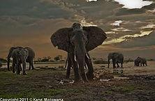 Mammals-3