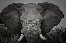 Mammals-5